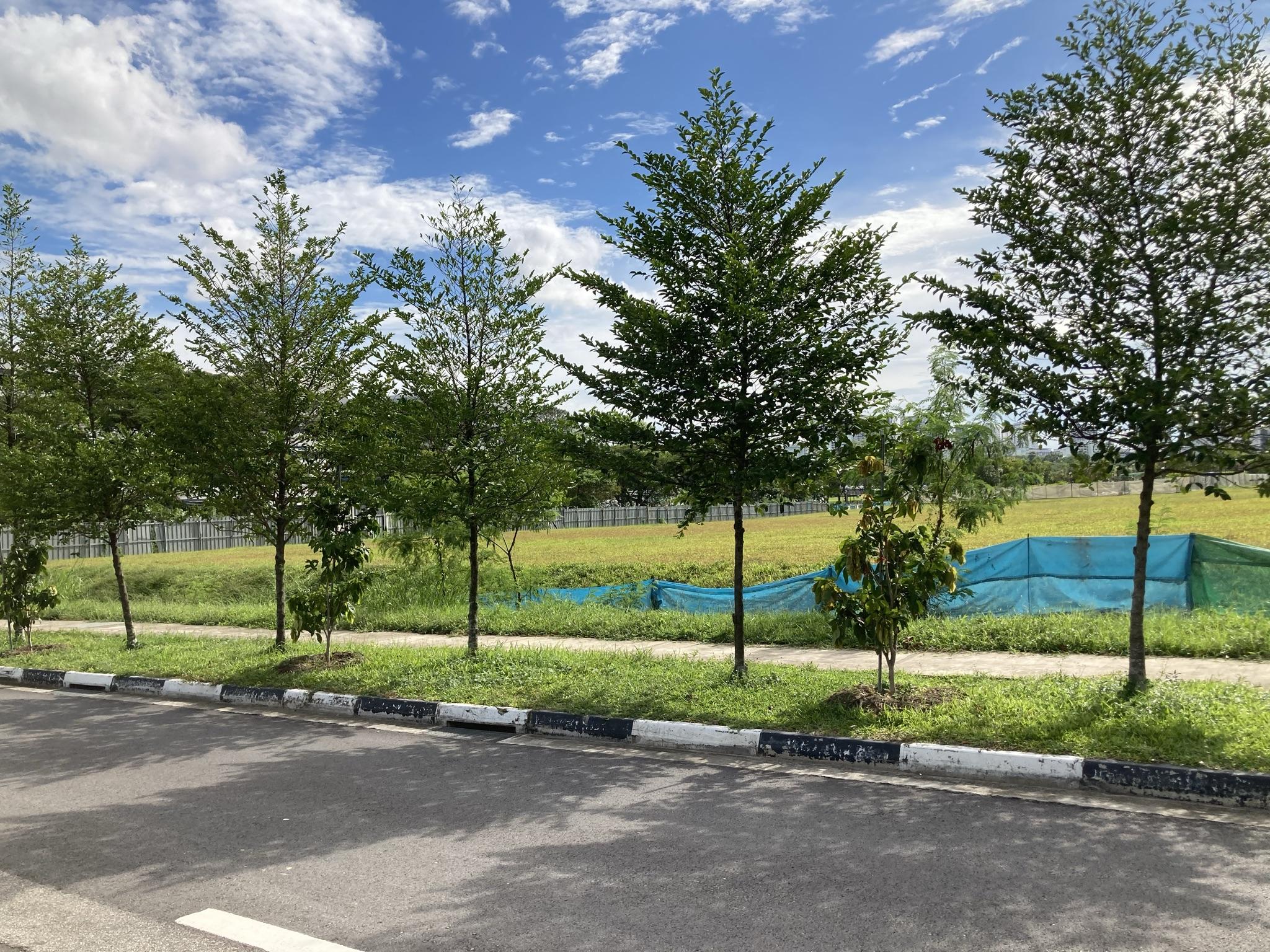 Belgravia Ace Tong Eng Group Luxury Villas Near to Seletar Mall and Ang Mo Kio Hub